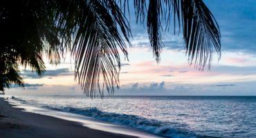 Terra incognita : voyage en Guyane