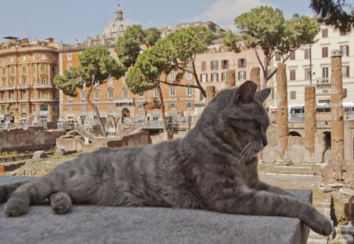 Sanctuaire des chats