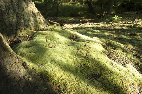 Forêt de Swinley