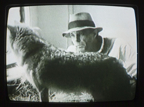 Joseph Beuys, Coyote