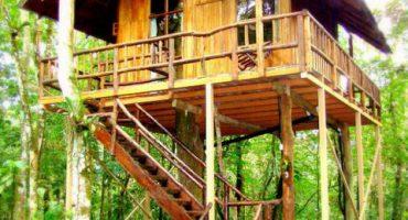 Dormir dans les arbres : les plus beaux hôtels arbres