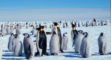 5 merveilles de la nature à visiter avant qu'elles ne disparaissent