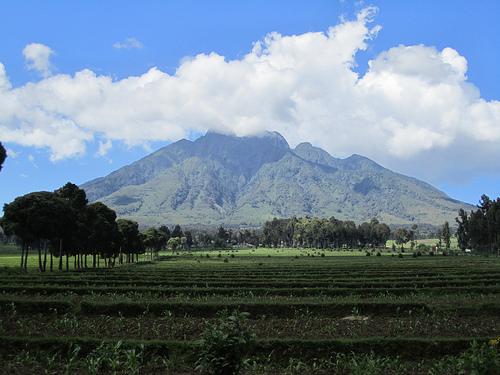 Parc national des Volcans