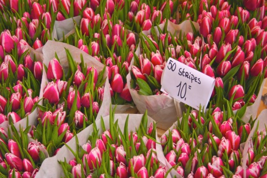 Les tulipes d'Amsterdam
