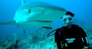 Petit tour du monde des meilleurs spots de plongée