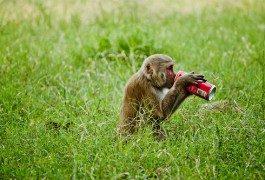 Des sodas «alter» contre la «Coca-Colanisation»