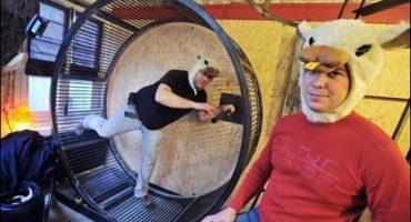 Hôtel : dans la peau d'un Hamster