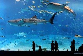 Le plus grand parc marin du monde ouvrira bientôt à Singapour