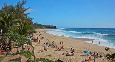 Les requins ne tueront pas le tourisme à La Réunion !