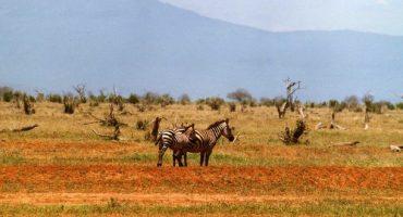 Un visa touristique unique pour le Kenya, l'Ouganda et le Rwanda