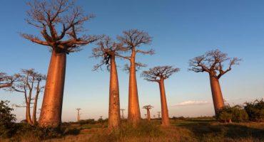 Des mesures pour protéger les touristes à Madagascar