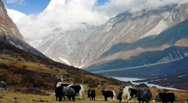 Vallée-Langtang