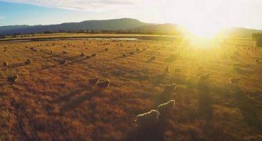 La vidéo qui buzzzz : l'Australie vue du ciel