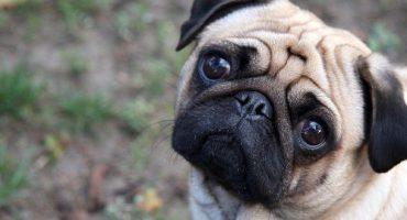 Berlin taxe les chiens des touristes !