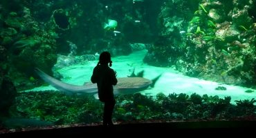 Océanopolis à Brest : bientôt 10 millions de visiteurs !