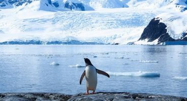 L'Antarctique, c'est 3000 dollars pour 5 heures !
