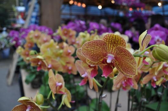 fleurs hong kong