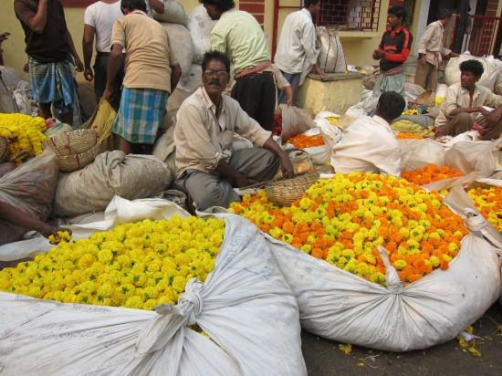 fleurs inde