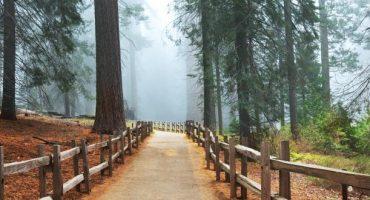 A la découverte des parcs nationaux de Californie