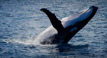 Voir des baleines et des dauphins sans aller à Marineland
