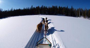 Où faire une randonnée en traîneau à chiens cet hiver ?