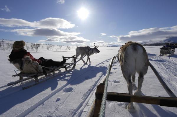 traineau a renes Laponie