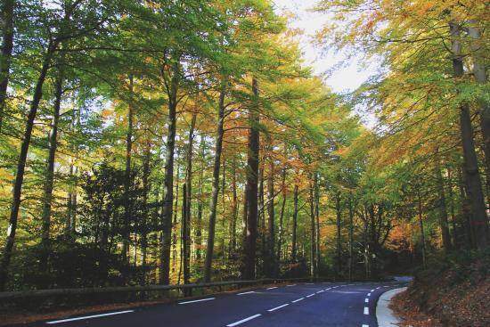 Vizzavona en automne