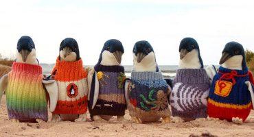 De jolis tricots pour de gentils pingouins australiens