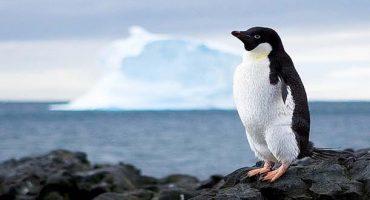 Un job dans un bureau de poste de l'extrême en Antarctique