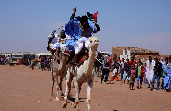dakhla - chameau