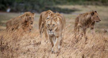 Les réserves animalières de la Tanzanie