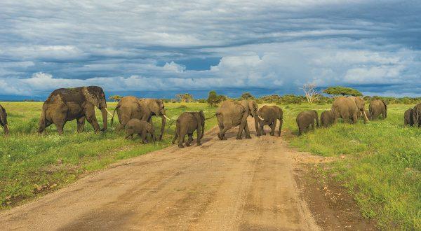 Parc Arusha - Tanzanie