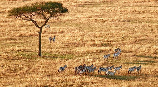 Serengeti-Tanzanie