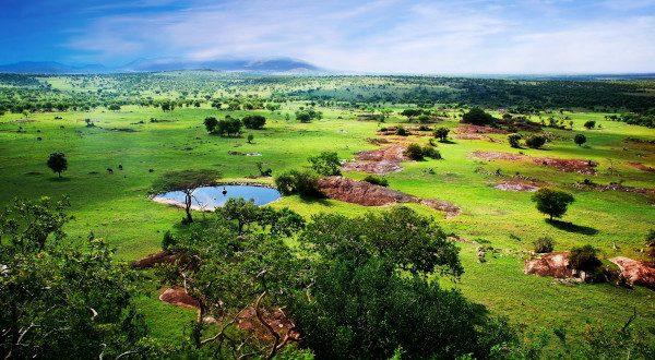 Tarangire - Tanzanie