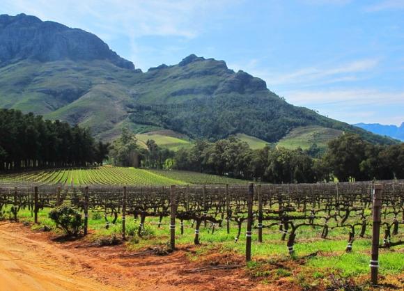 Vignobles à Stellenbosch