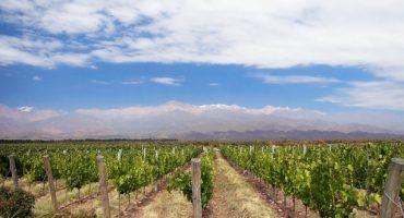 Oenotourisme : top 5 des pays où vin et voyage font bon ménage