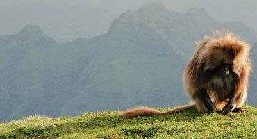Visiter le Parc national du Simien en Éthiopie