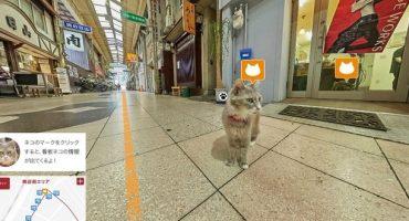 Cat Street View pour découvrir le Japon autrement