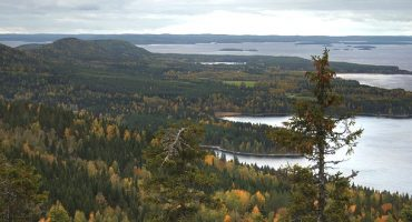 Les plus belles forêts en Europe