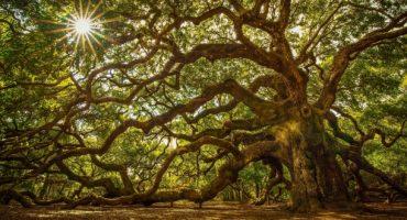Les plus belles forêts en France pour profiter de l'automne