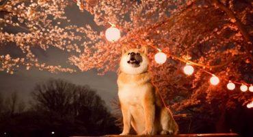 Le nouvel ambassadeur du tourisme au Japon est … un chien !