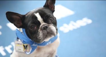 Des chiens comme thérapie anti-stress à l'aéroport