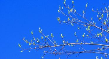 SNCF : Les ventes du printemps sont ouvertes !