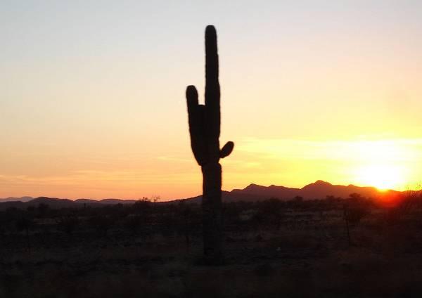coucher de soleil cactus arizona