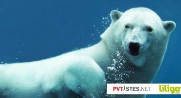 Canada : rencontre avec 8 animaux surprenants