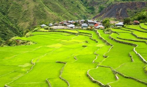 rizières terrasses 2