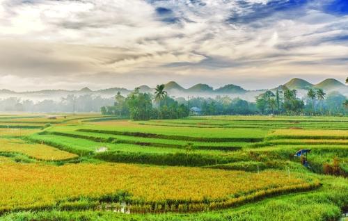 rizières aux Philippines