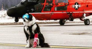 Piper, le chien de patrouille des pistes d'atterrissage,  fait sensation  sur Internet