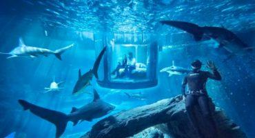 Airbnb : Une nuit à l'Aquarium de Paris, au milieu des requins !