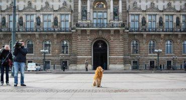 Tschikko, le lion d'Hambourg